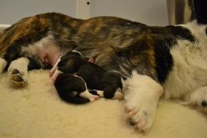 Puppies 020