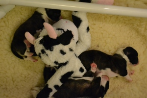 Snuggle Babies