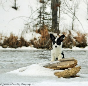 Gizmo River Shoot (2)
