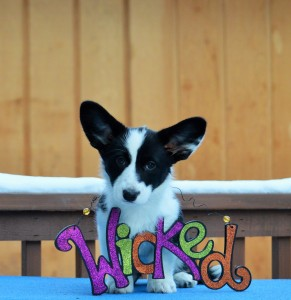 Gizmo Wicked (2)