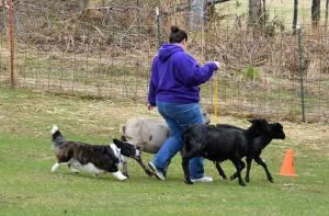 Gable herding