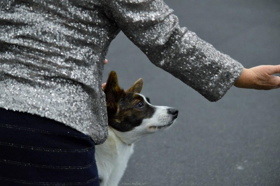 CWCCSC Puppy Sweeps Jan 2017 (8).jpg