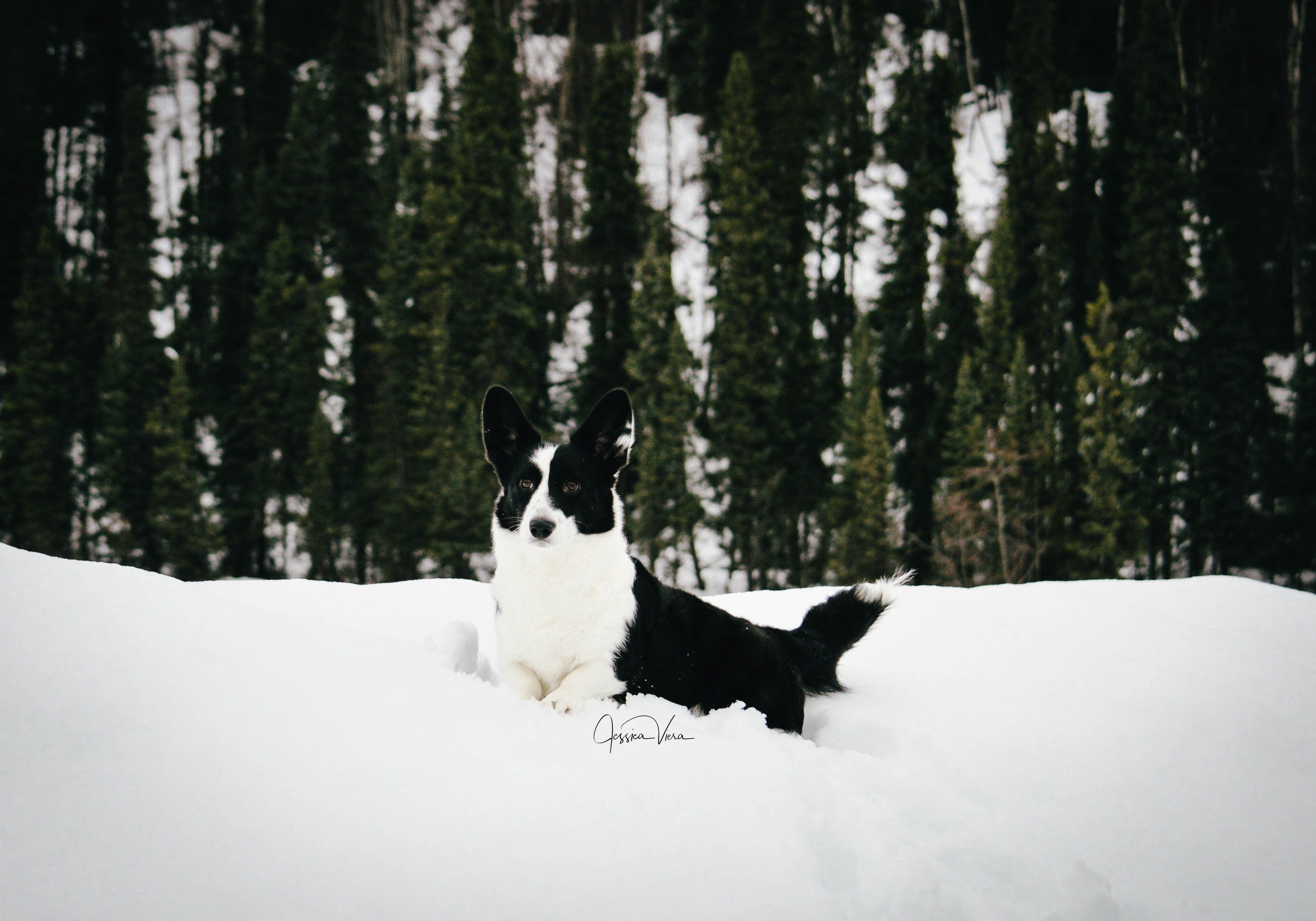 Gizmo Snow